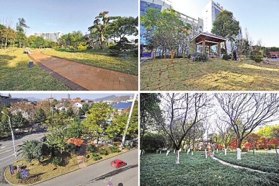 株洲市二医院附近街旁游园等处的绿地景观.