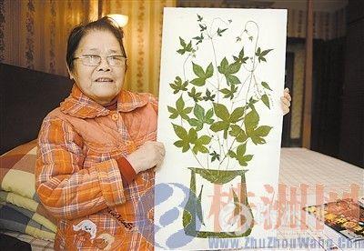 心 奶奶 会用树叶贴画,会上网写诗